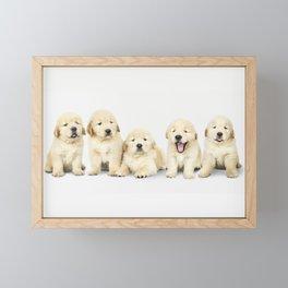 Portrait Of Golden Retriever Puppies Framed Mini Art Print