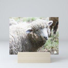Sweet Sheep Face stare Mini Art Print
