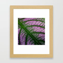 Violet Leaf Framed Art Print