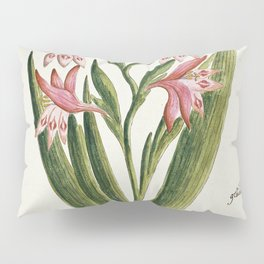 Robert Jacob Gordon - Gladiolus carneus D. Delarochev - 1777 - 1786 Pillow Sham
