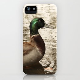 Sitting Duck waits iPhone Case