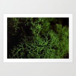 Fruticose lichen Art Print