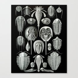 Trilobites and Fossils by Ernst Haeckel Canvas Print