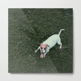 Dog in Grass Metal Print