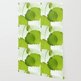 Aspen leaves Wallpaper