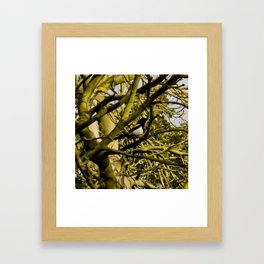 Magpie resting in a tree Framed Art Print