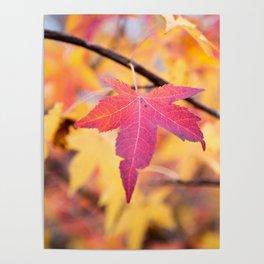 Autumn Still Poster