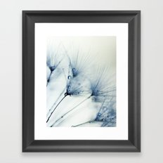 dandelion blue II Framed Art Print
