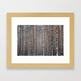 Close view of the winter pine tree forest Framed Art Print