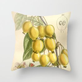 Pyrus ringo 'Chinese Pearleaf Crabapple' 1909 Throw Pillow