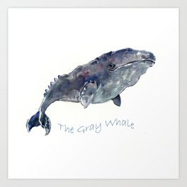Gray Whale Art Print