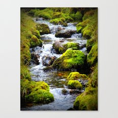 For the Love of Moss Canvas Print