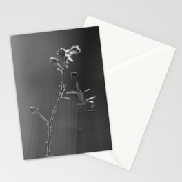 Black and white buds Stationery Cards