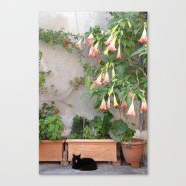 Street Cat of Positano Canvas Print