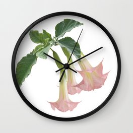 Angel's Trumpet Flowers isolated on white background Wall Clock
