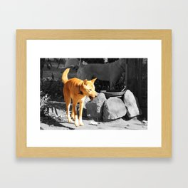The Dingo Framed Art Print