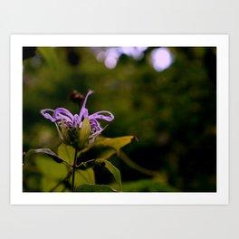 Purpe Bloomig Wild FLower Art Print