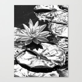 Water Lilies Shining Silver in the Sun Canvas Print