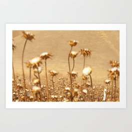 cotton Art Print