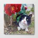Orazio, the cat of camellias by magicalcats