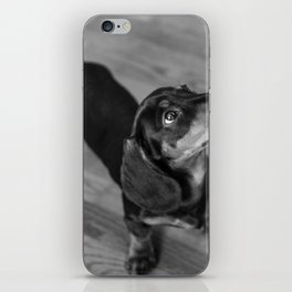Weenie dog closeup (black and white) iPhone Skin