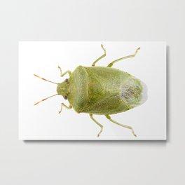 Green shield bug species Palomena prasina Metal Print