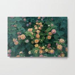 Mediterranean Flowers Metal Print