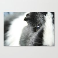 guinea pig Canvas Prints featuring Guinea Pig by Florian Wagner