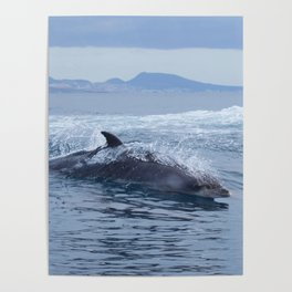 Dolphin: love for waves, love for life Poster