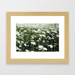 White Summer Daisies Flowers Framed Art Print