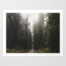 Redwoods in Prairie Creek Art Print