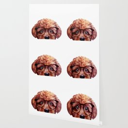 Toy poodle reddish brown with glasses Wallpaper