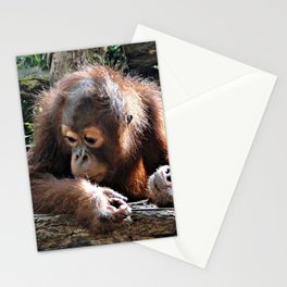 Orang Baby 1015P Stationery Cards