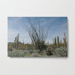 Ocotillo Desert Metal Print