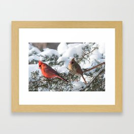 Sunny Winter Cardinals in the Adirondacks Framed Art Print