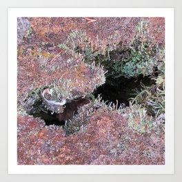 Mousse et lichen Art Print