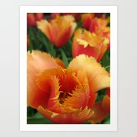 Orange Parrot Tulips Art Print