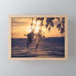 Winter Morning sunrise on leaves at Creamers Field, Fairbanks Alaska Framed Mini Art Print