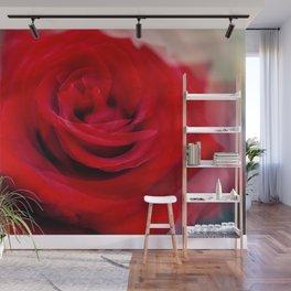 Singl Red Rose Wall Mural