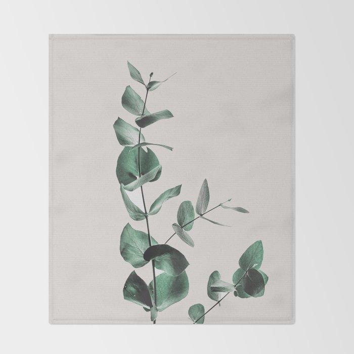 Eucalyptus Decke