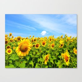 Sun Eating Flowers Canvas Print