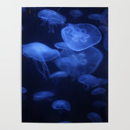 Jellyfish Glowing in Blacklight Photo Print 2 Poster