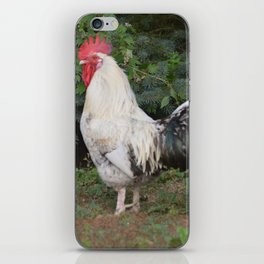 Rise and Shine Rooster - Farm Animal Photography iPhone Skin