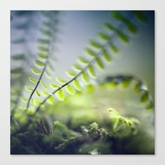 little green Canvas Print