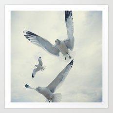 Seagull {Three} Art Print