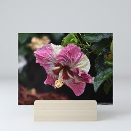 Portrait of a Hibiscus Mini Art Print