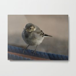 Wagtail on a rope Metal Print