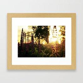 Sugar Hill, NH Framed Art Print