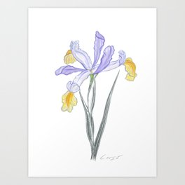 Iris 05 Botanical Flower * Lavender Purple Japanese Iris Art Print