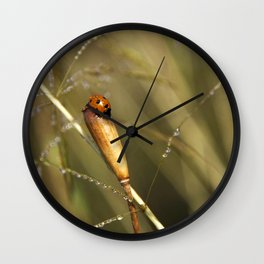 Morning Dew On Lady Bird Wall Clock